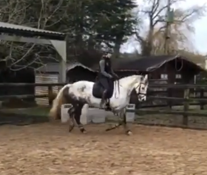 Canter Trot Canter